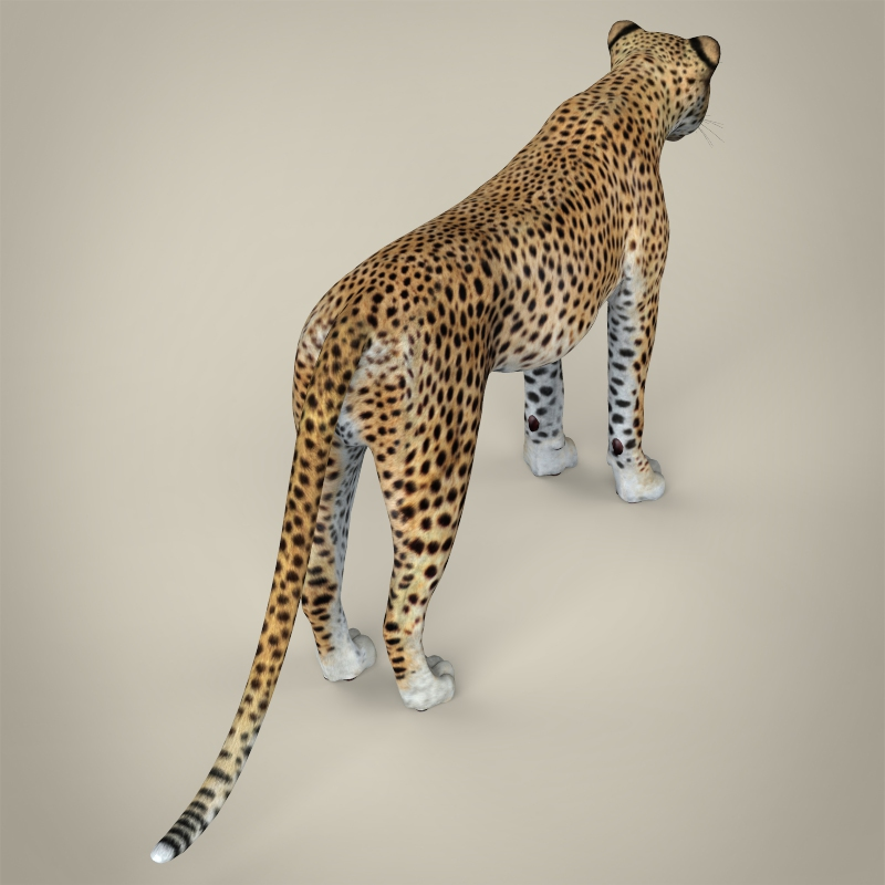 reāls cheetah 3d modelis 3ds max fbx c4d lwo ma mb obj 161767