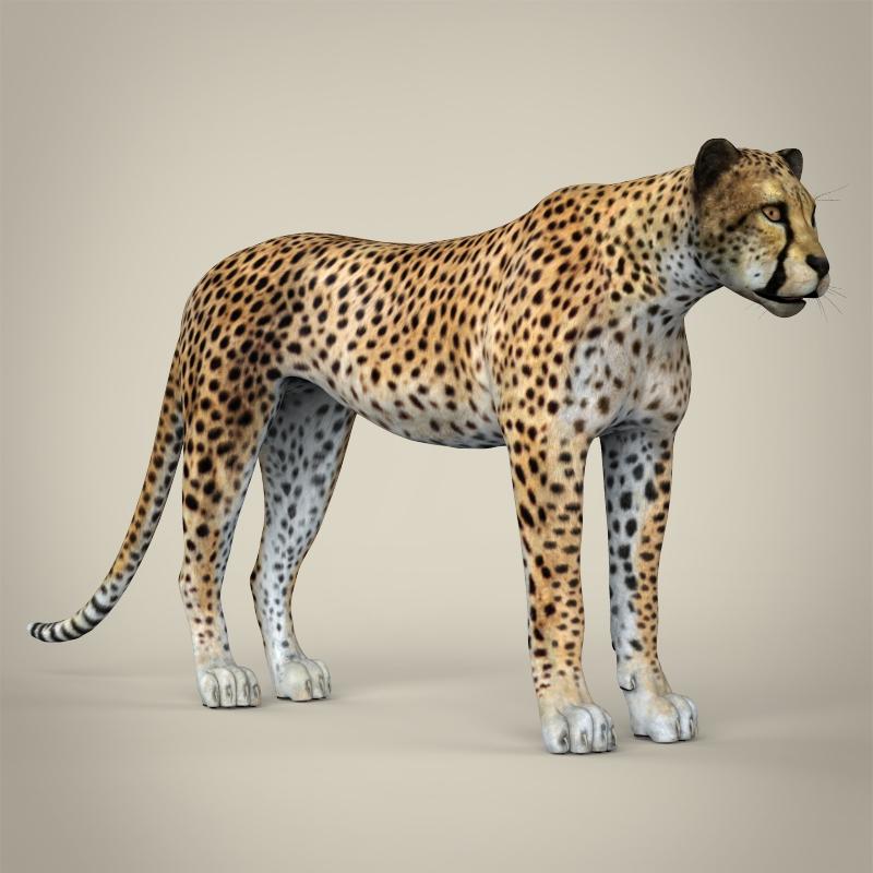 reāls cheetah 3d modelis 3ds max fbx c4d lwo ma mb obj 161768