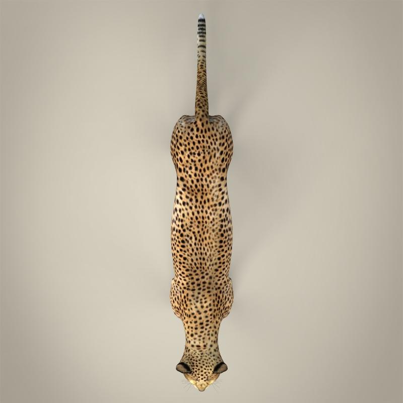 reāls cheetah 3d modelis 3ds max fbx c4d lwo ma mb obj 161769