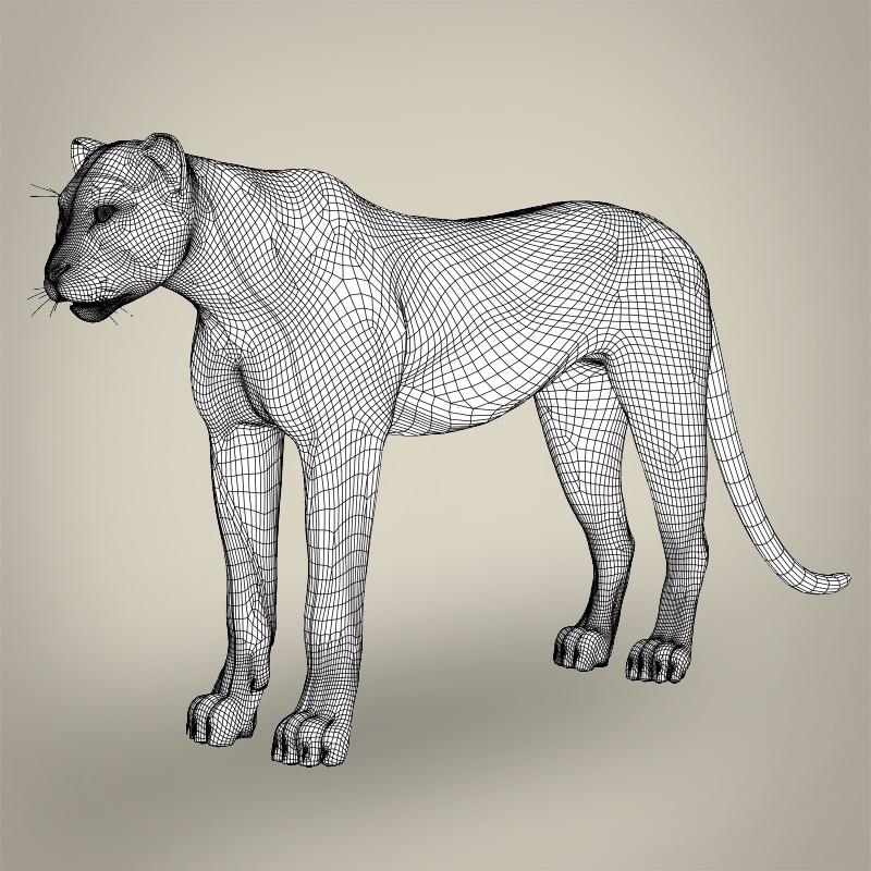 reāls cheetah 3d modelis 3ds max fbx c4d lwo ma mb obj 161770