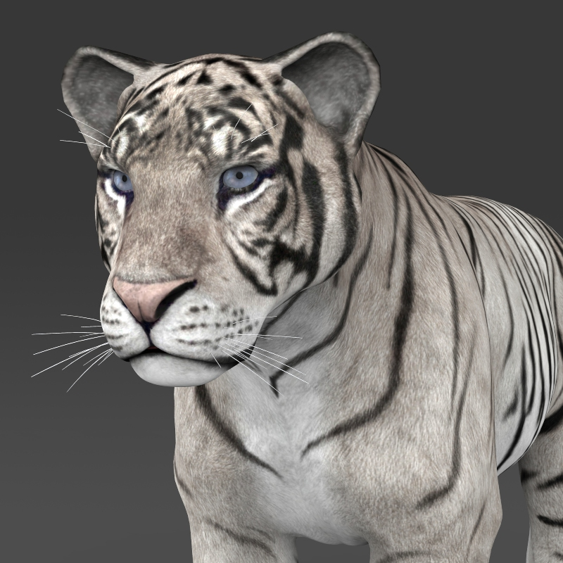 realistic white tiger 3d model 3ds max fbx c4d lwo ma mb obj 161329