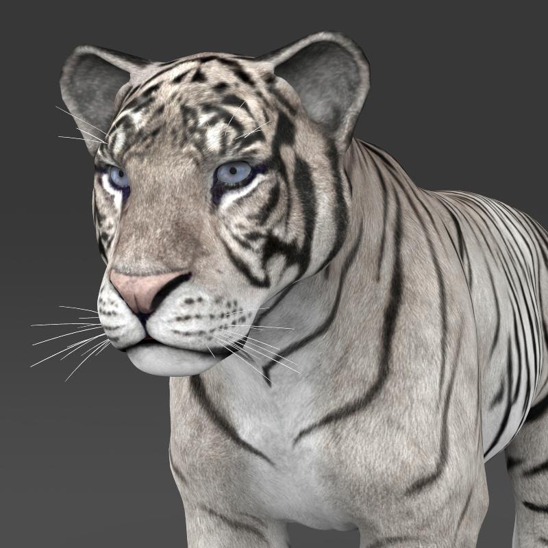 реален бел тигар 3d модел 3ds максимум fbx c4d lwo ma mb obj 161329
