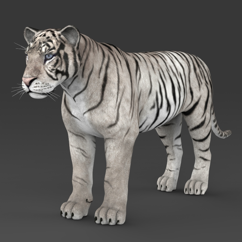 reāls balts tīģeris 3d modelis 3ds max fbx c4d lwo ma mb obj 161330