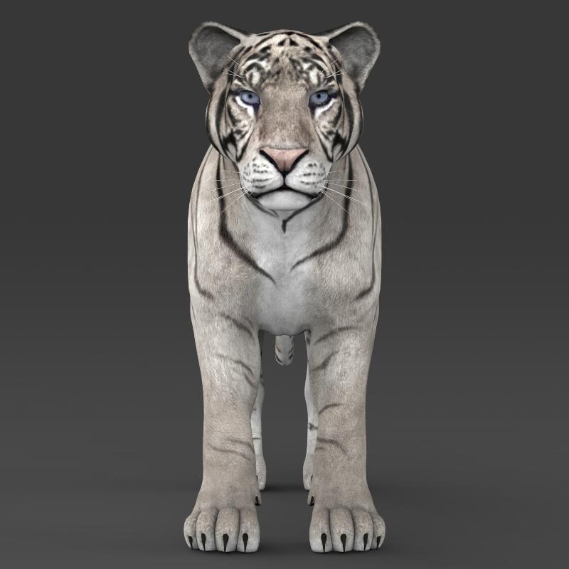 reāls balts tīģeris 3d modelis 3ds max fbx c4d lwo ma mb obj 161331