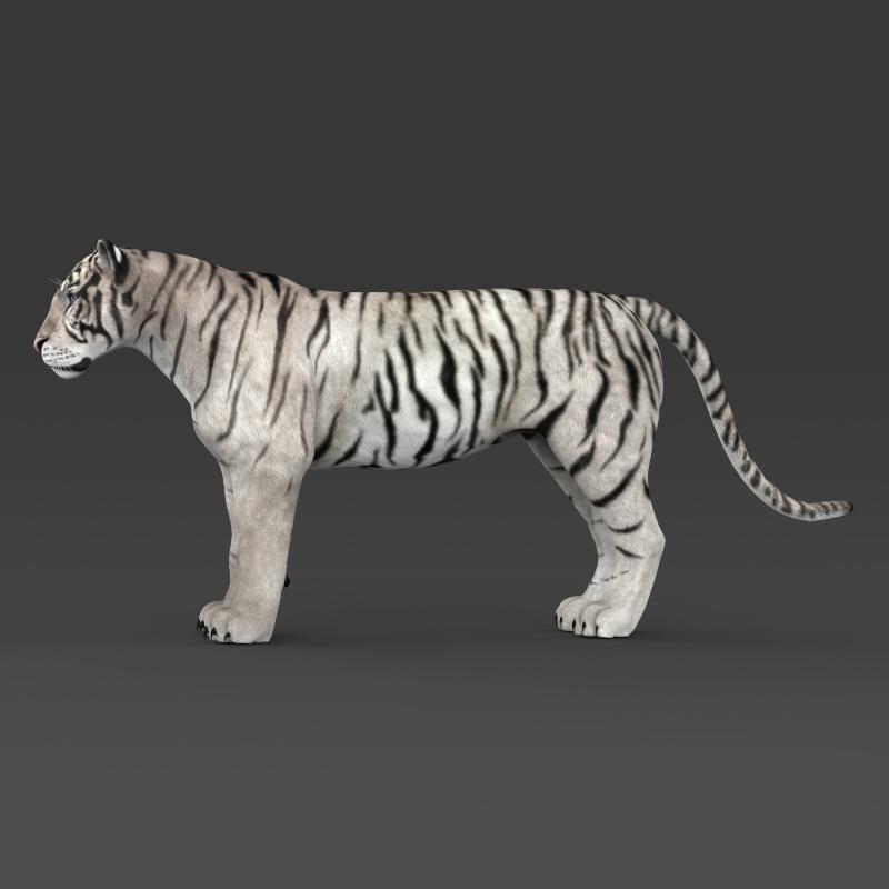 reāls balts tīģeris 3d modelis 3ds max fbx c4d lwo ma mb obj 161332