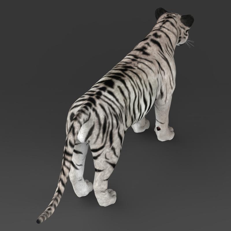reāls balts tīģeris 3d modelis 3ds max fbx c4d lwo ma mb obj 161334