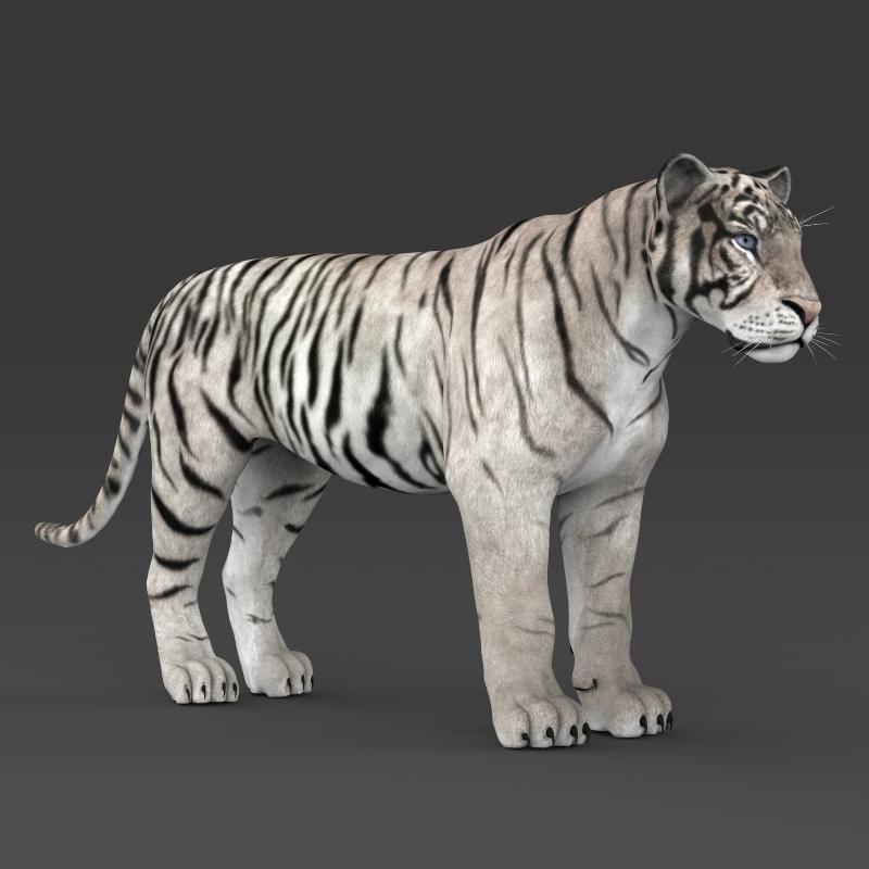 reāls balts tīģeris 3d modelis 3ds max fbx c4d lwo ma mb obj 161335