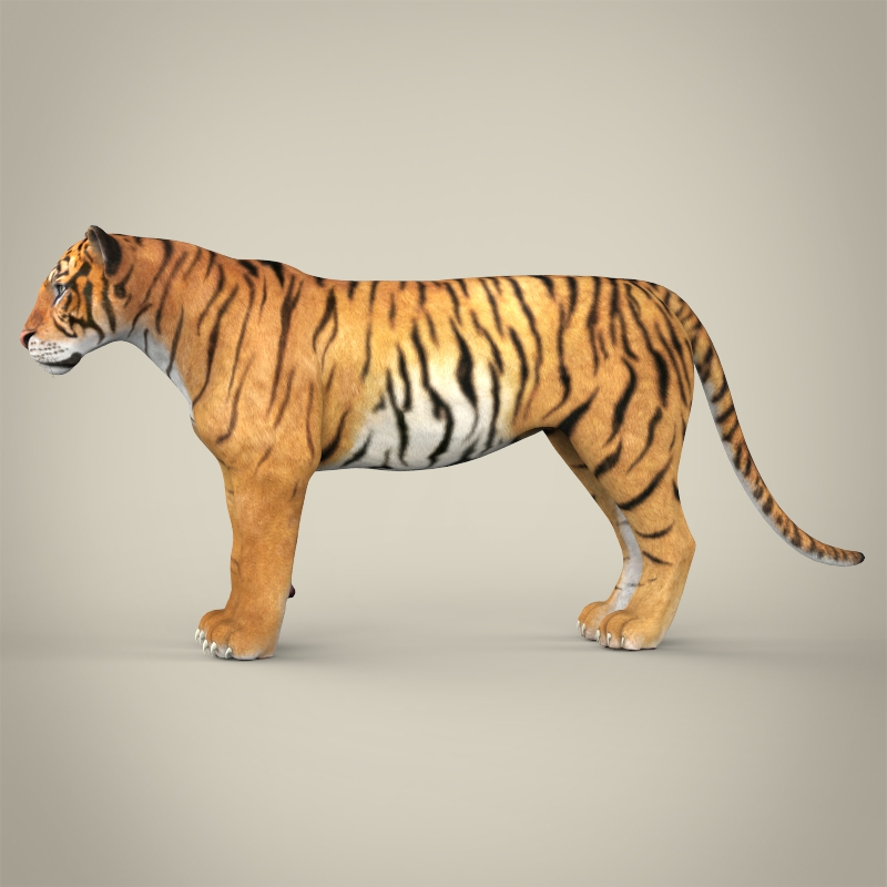 Realistic Bengal Tiger 3D Model