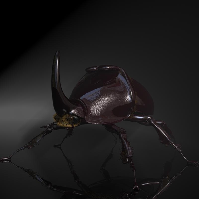 rhinoceros beetle rigged 3d model 3ds max fbx lwo obj 120229