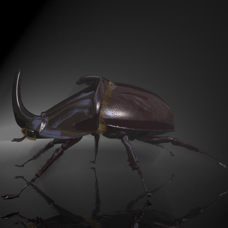 rhinoceros beetle rigged 3d model 3ds max fbx lwo obj 120230