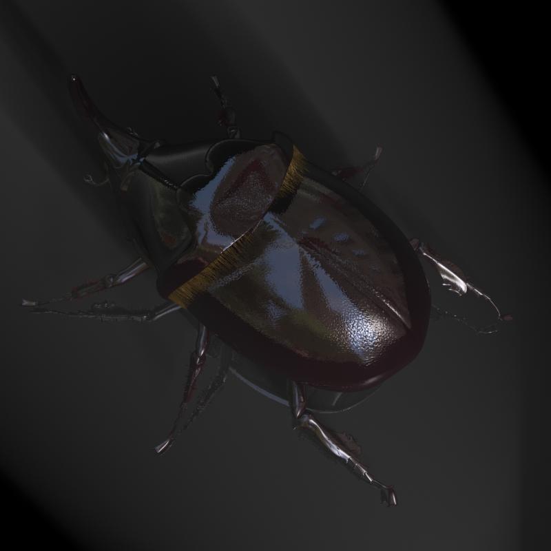 rhinoceros beetle rigged 3d model 3ds max fbx lwo obj 120231