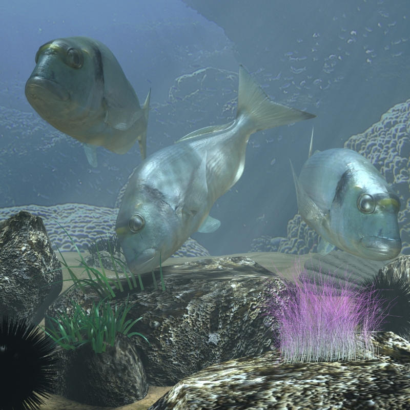 sea bream fish rigged with underwater scene 3d model 3ds max fbx lwo obj 119135