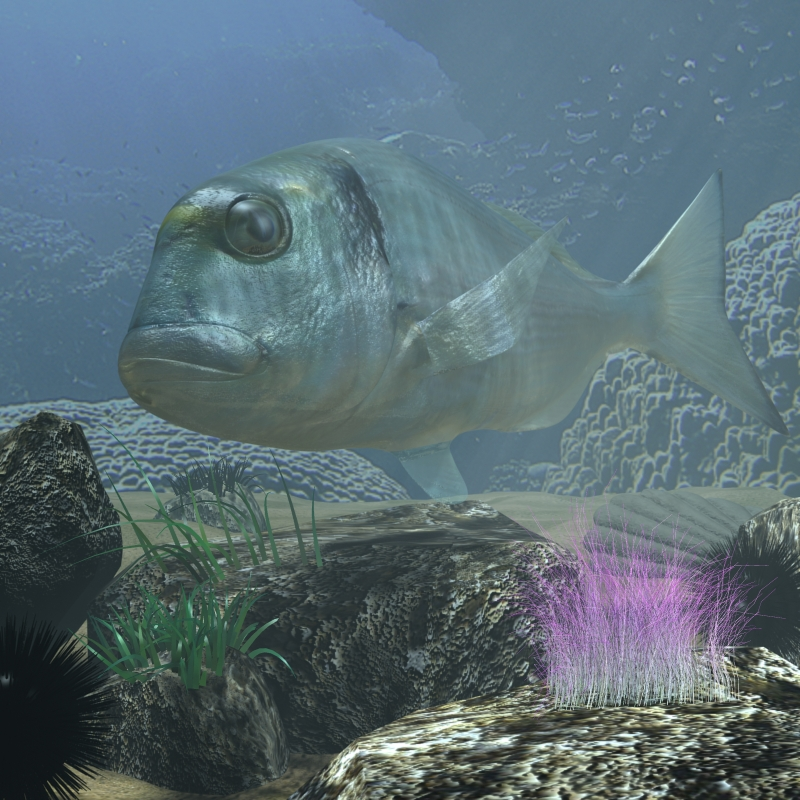 sea bream fish rigged with underwater scene 3d model 3ds max fbx lwo obj 119136