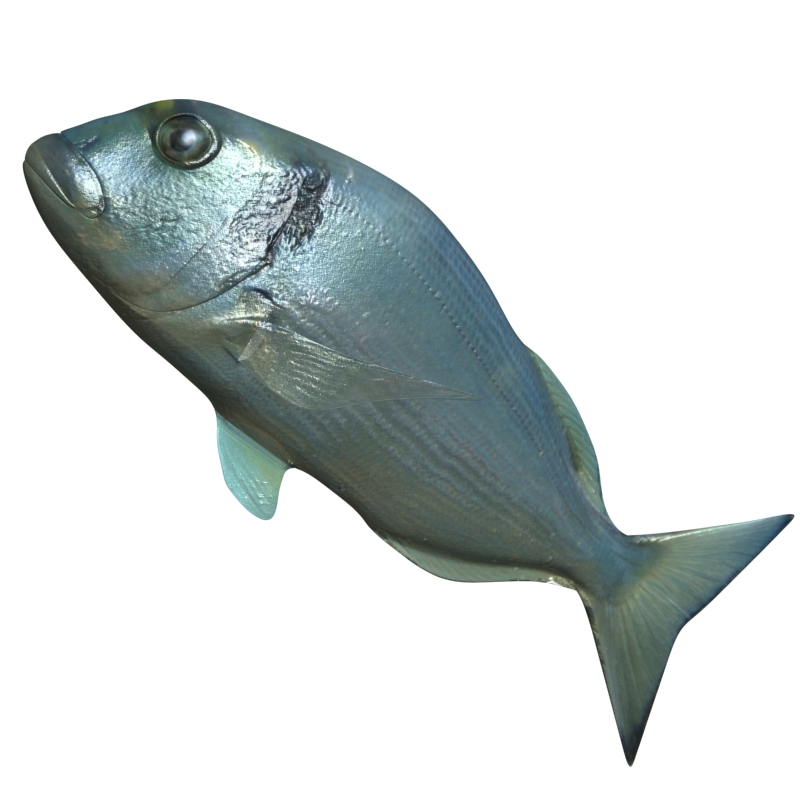 sea bream fish rigged with underwater scene 3d model 3ds max fbx lwo obj 119137