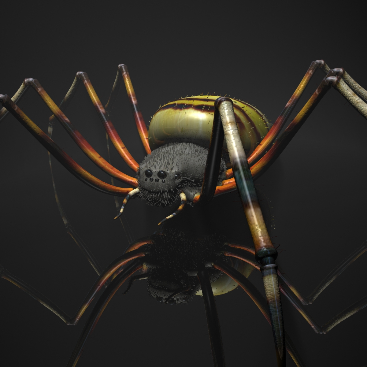 spider tiger rigged 3d model max fbx obj 160768