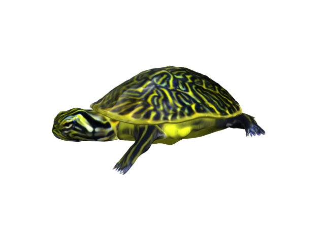turtle animal 3d model 3ds max fbx texture obj 152722