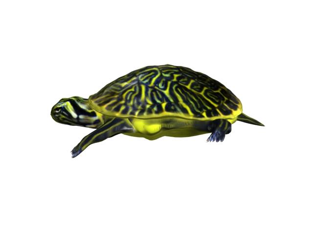 turtle animal 3d model 3ds max fbx texture obj 152723