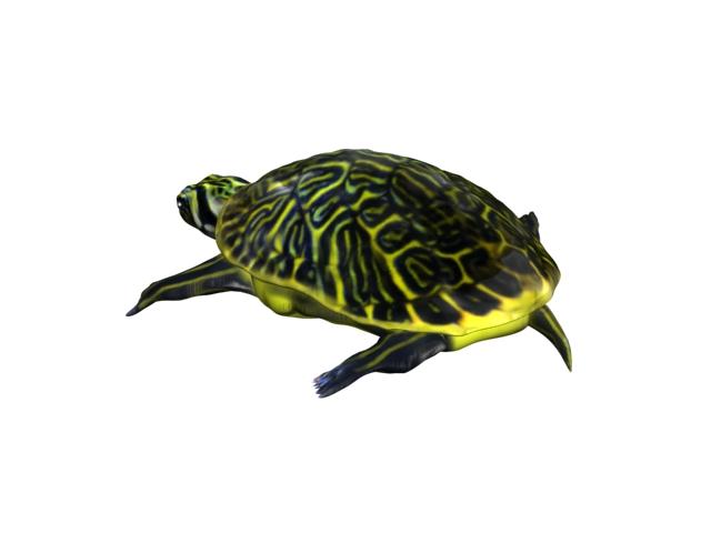 turtle animal 3d model 3ds max fbx texture obj 152724