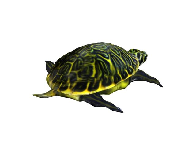 turtle animal 3d model 3ds max fbx texture obj 152725
