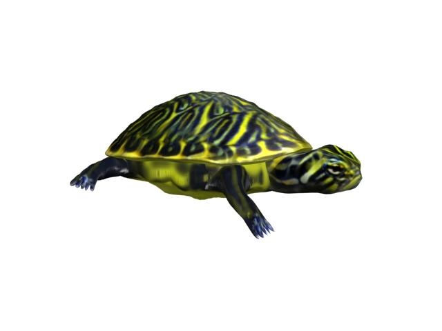 turtle animal 3d model 3ds max fbx texture obj 152726