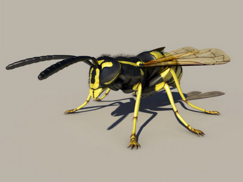 wasp 3d model 3ds max obj 158785