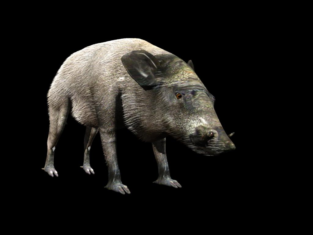 wild boar 3d model 3ds dxf fbx dae 129759