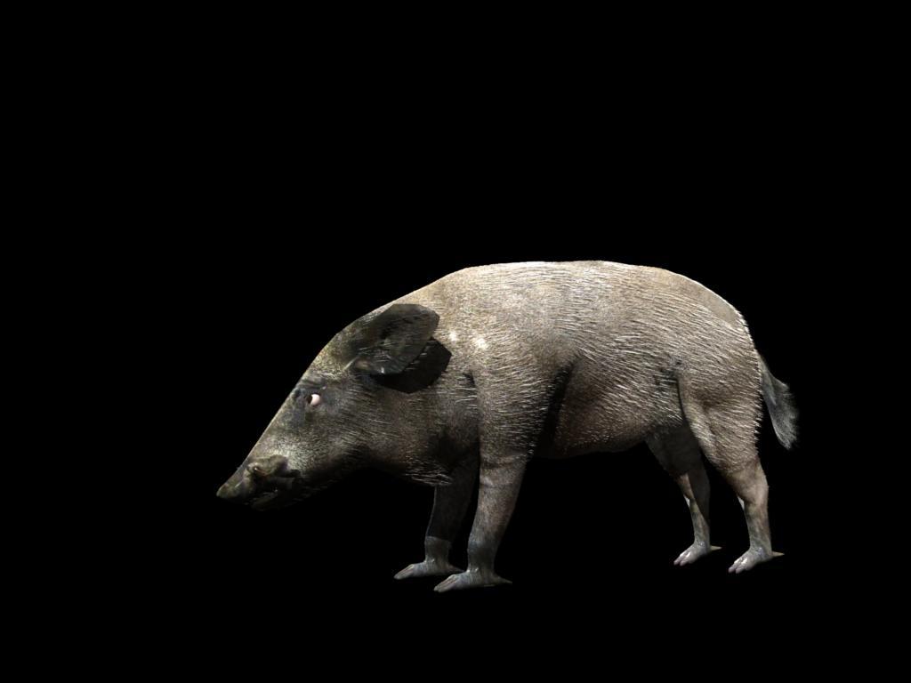 divlja svinja 3d model 3ds dxf fbx dae 129761