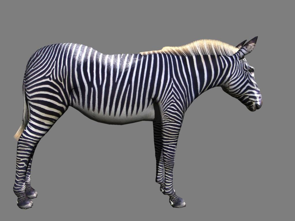 zebra v2 3d modelis 3ds obj 132775