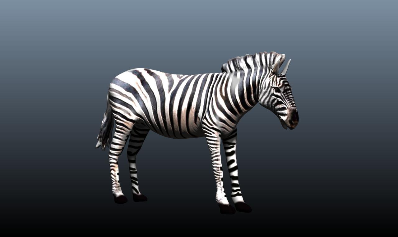 zebra v3 3d model obj 148211