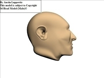head model (male) 3d model 3ds 92623