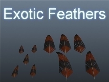exotic feathers 001 3d model 3ds max obj 102506
