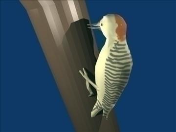 Woodpecker 3d líkan blanda obj 91810