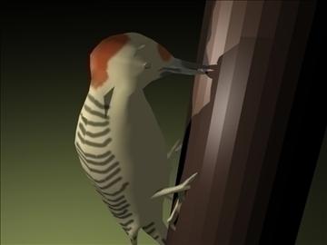 Woodpecker 3d líkan blanda obj 91811