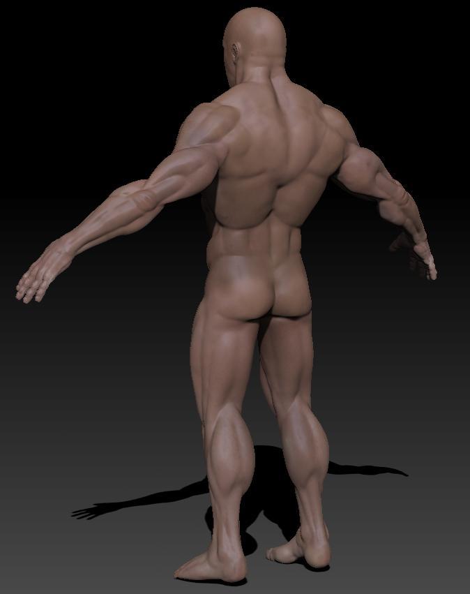 detaljan muški akt 3d model teksture obj ztl 141095