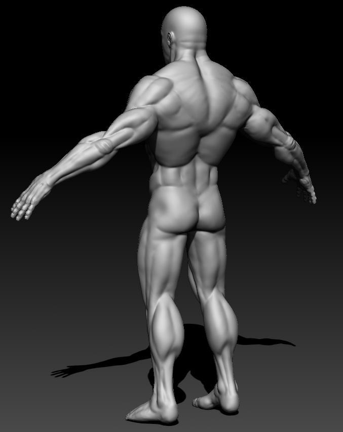 detaljan muški akt 3d model teksture obj ztl 141097