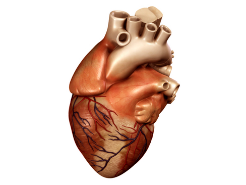 heart 2 3d model 3ds max lwo ma mb obj 116669
