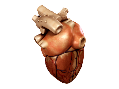 heart 2 3d model 3ds max lwo ma mb obj 116672