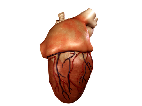 heart 2 3d model 3ds max lwo ma mb obj 116675