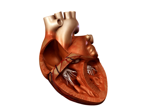 heart 2 3d model 3ds max lwo ma mb obj 116683