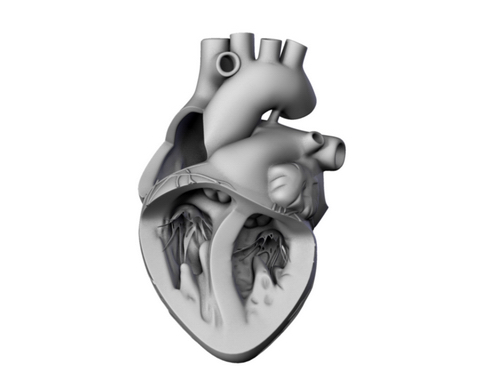 heart 2 3d model 3ds max lwo ma mb obj 116690