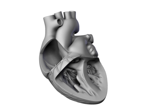 heart 2 3d model 3ds max lwo ma mb obj 116691