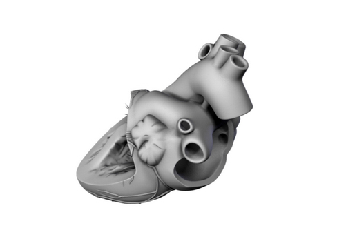 heart 2 3d model 3ds max lwo ma mb obj 116694