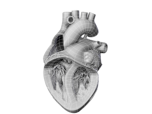 heart 2 3d model 3ds max lwo ma mb obj 116695