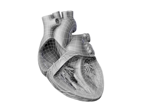 heart 2 3d model 3ds max lwo ma mb obj 116696