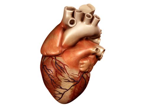 Heart 3d model 3ds max lwo lws lw ma mb obj 116669