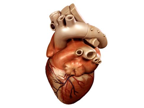 Heart 3d model 3ds max lwo lws lw ma mb obj 116670