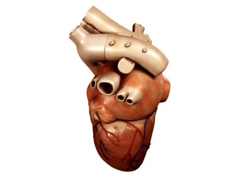 Heart 3d model 3ds max lwo lws lw ma mb obj 116671