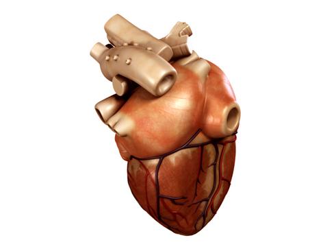 Heart 3d model 3ds max lwo lws lw ma mb obj 116672