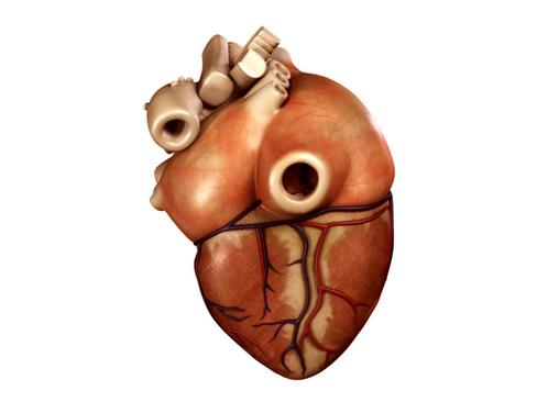 Heart 3d model 3ds max lwo lws lw ma mb obj 116673