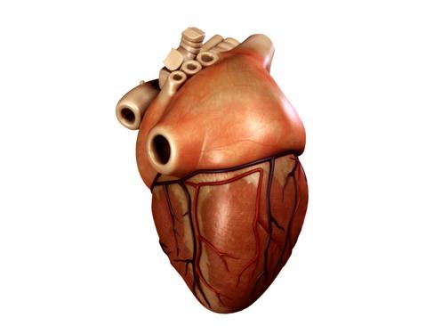Heart 3d model 3ds max lwo lws lw ma mb obj 116674